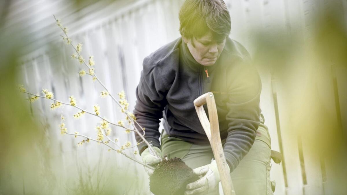 Vurder å hyre fagfolk til å følge opp treet i sine første leveår.
