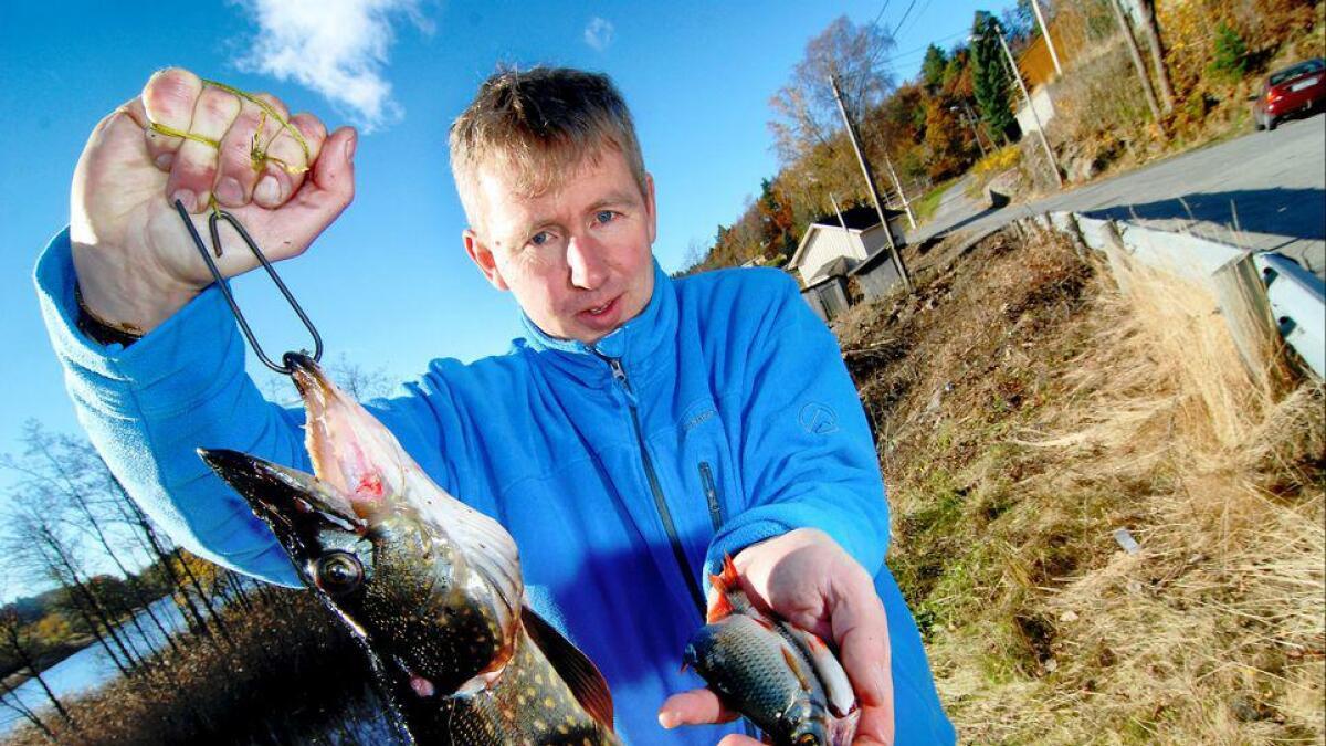 Torvild Selås i Agder-politiet viser frem gjedda som var festet levende til en krok i vannet. Agnet til polakkene på fisketur var levende sørv.