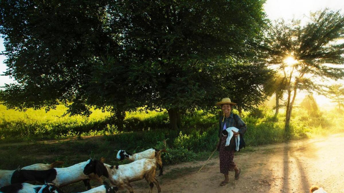 Jordbruk og dyrehald er hovudindustrien, og sysselset om lag 65 prosent av arbeidsstyrken. Gjetaren ber ein sliten killing som har fått for mykje trim.