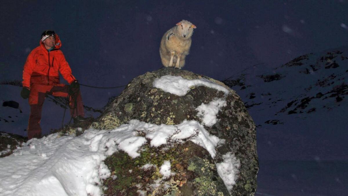 Vidar Lundås var med for å redde den bortkomne sauen på julaften.