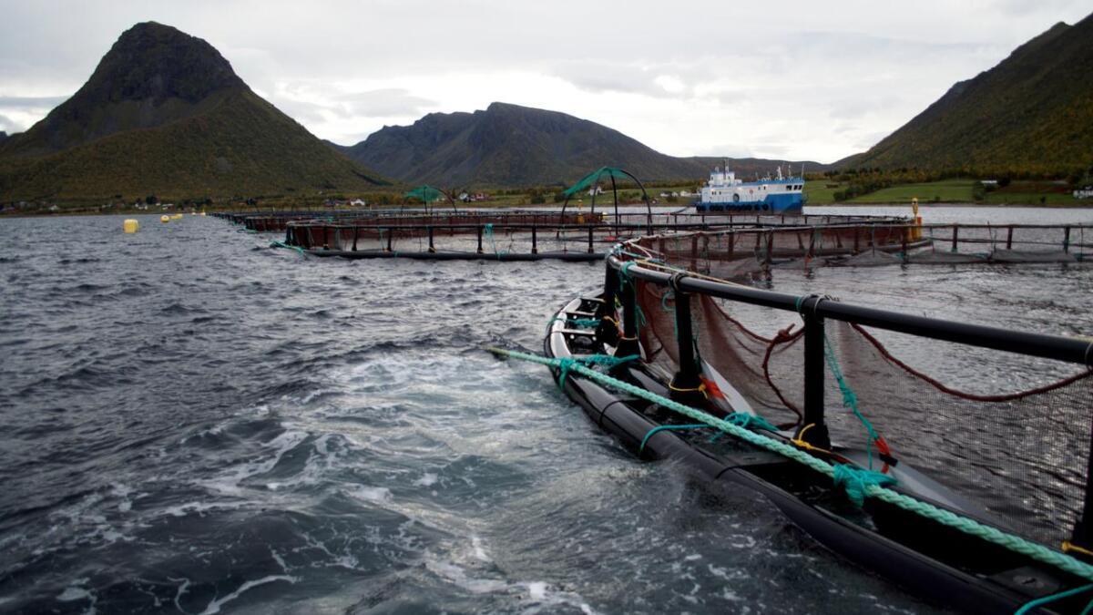 Hadsel får mest i Nordland fra Havbruksfondet i år.