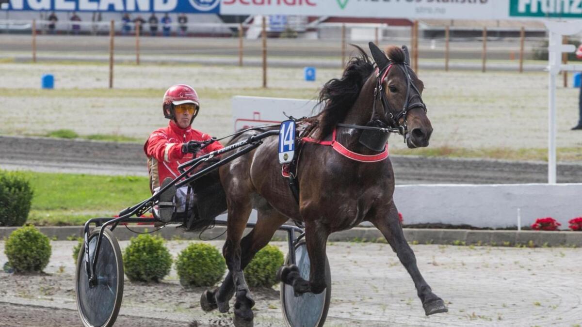 Grendi-hesten Stjerne Kos var nok ein gong knusande overlegen på tråvbanen. Her frå eit tidligare sigersløp saman med same kusken, Tom Erik Solberg.