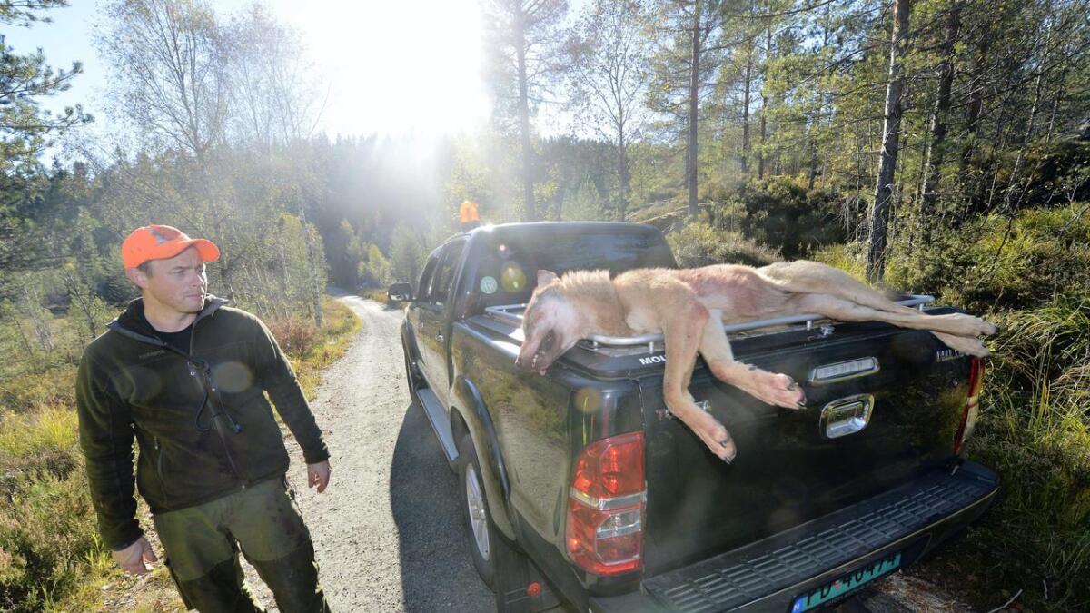 Jeger Georg Walstrøm med den døde ulven.