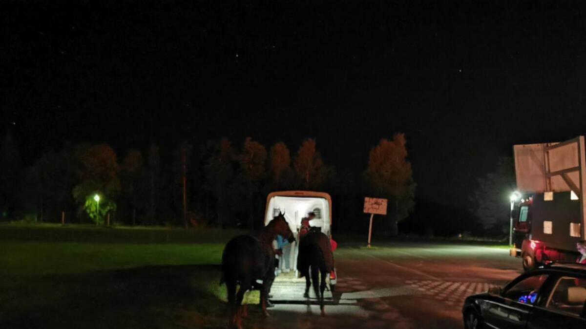 Rundt ti hester ble evakuert da to hus sto i full fyr på nabogården.