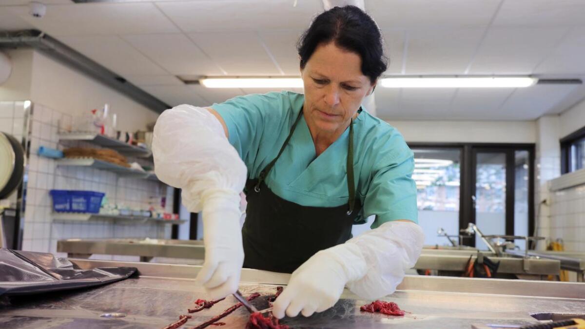 Forsker og patolog Helene Wisløff ved Veterinærinstituttet på jobb søndag. Hun obduserte flere hunder som man mistenker er rammet av den fortsatt ukjente hundesykdommen. Minst 25 hunder er registrert døde i Norge etter å ha hatt blodig diaré den siste tiden. Her tas det prøver av blodet som ligger i tarmen, som skal sendes til analyse.