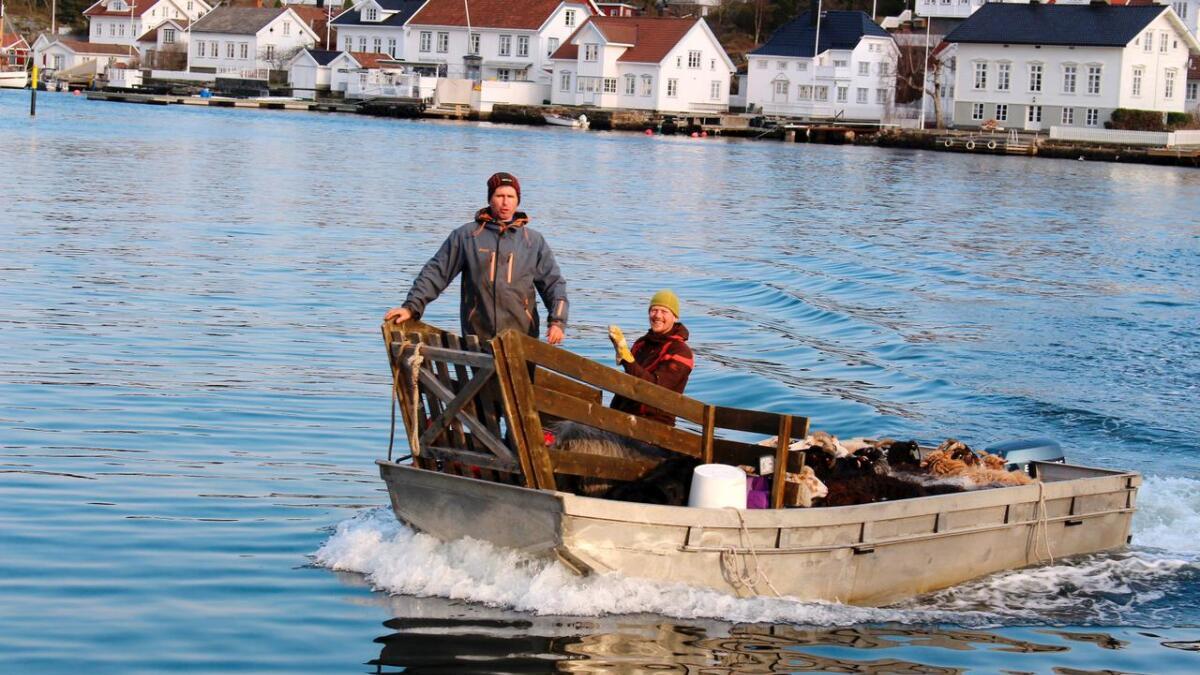 Tor Granerud og Anders Lyche Oppegaard er skjærgårdens sauegjetere sammen med hunden Dot.     Alle tre elsker å kjøre båt.