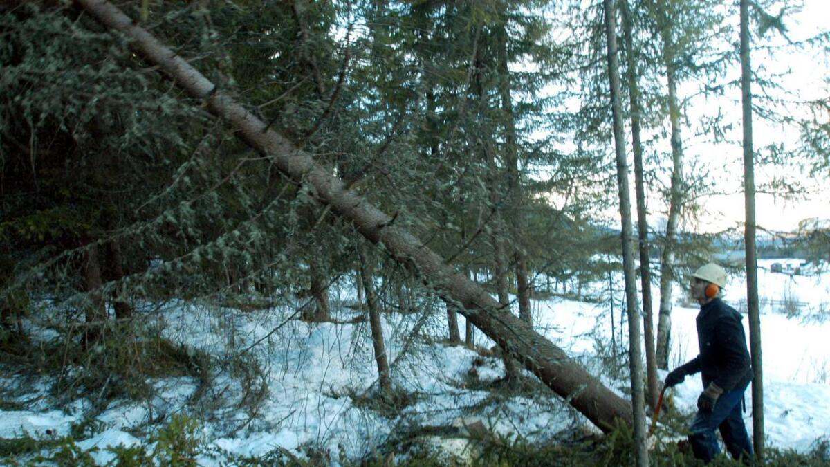 Ragnar Hulbaklien høgg i skogen i Grønlio.    Knut Flaget, Hemsedal køyrer med hesten    Majasokken