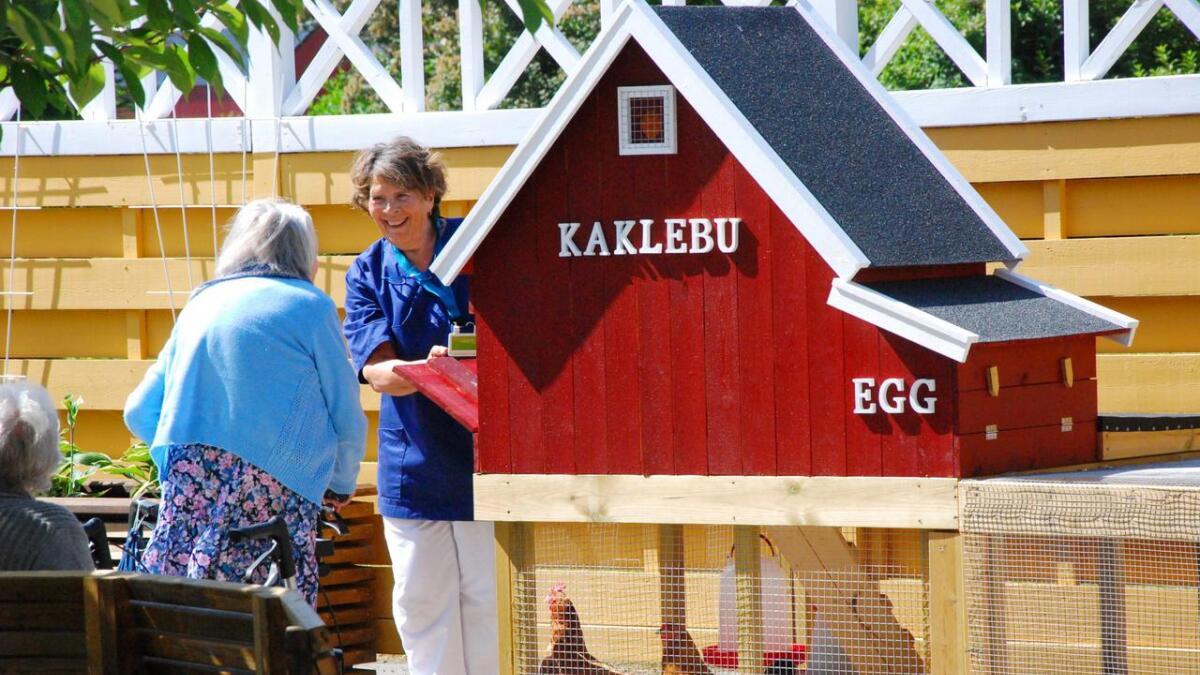 I sansehagen er spesielt «Kaklebua» veldig populær blant beboerne. Her bytter de på å hente egg, mate og kose med hønene som er på feriekoloni fremover de tre neste månedene.