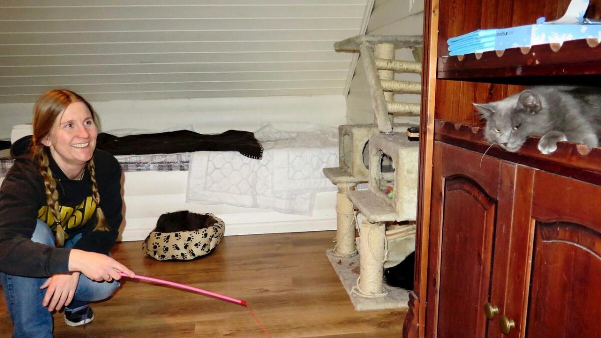 Maylin Gabrielsen prøver å fiske ut den noe skeptiske katten, Maiden, som har funnet et trygt sovested i hylla. i en privat garasjeleilighet på Blakstadheia, bor nå tre gatekatter mens de venter på nytt hjem.