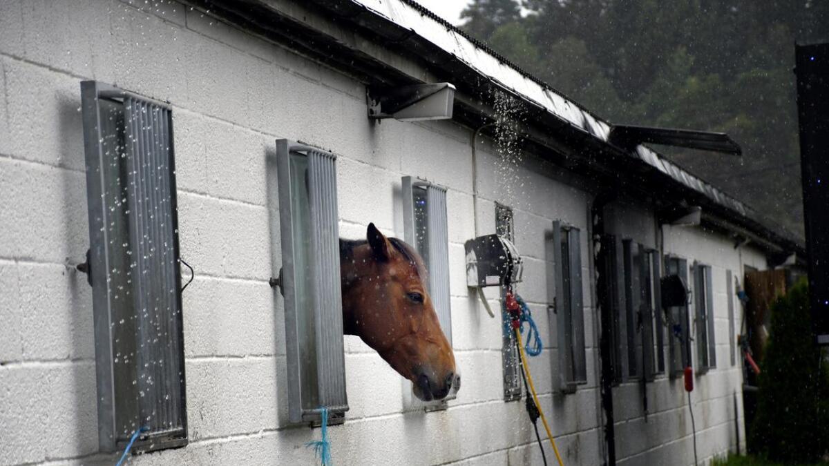 Denne hesten så ikke ut til å gjøre noe av litt regn, der den tittet ut fra boksen sin, under NM hos AGR lørdag.