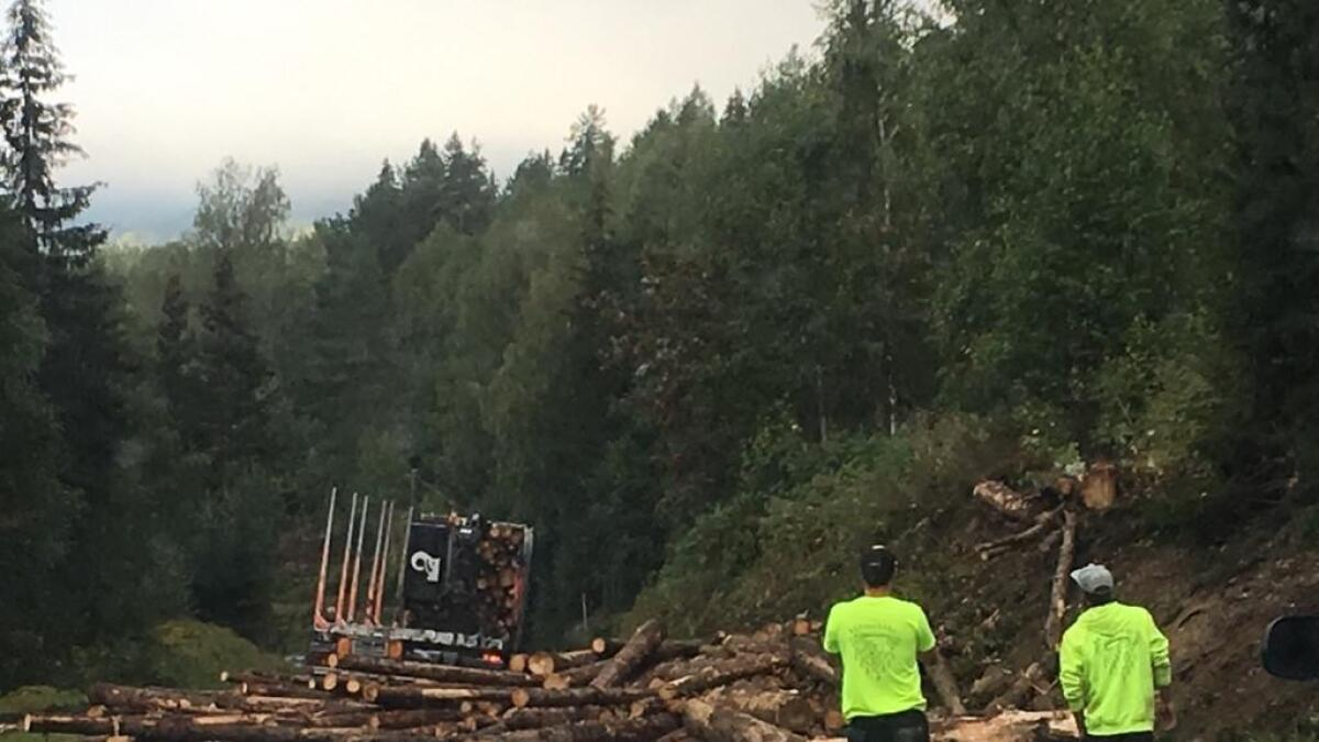 Her ligg stokkane strødd bak tømmerbilen.