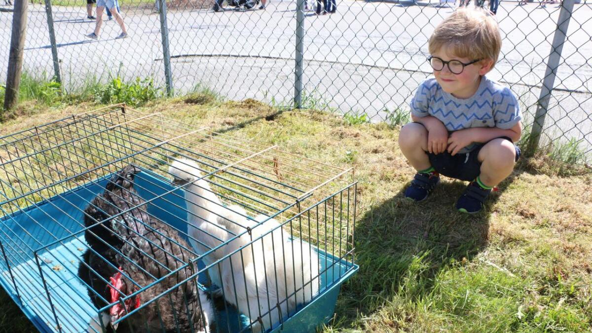 Olav Vetlejord (4 1/2) har planar om å delta i hønsedritebingoen. Fireåringen satsar på at tala 2 og 31 vil bety lukke for han.