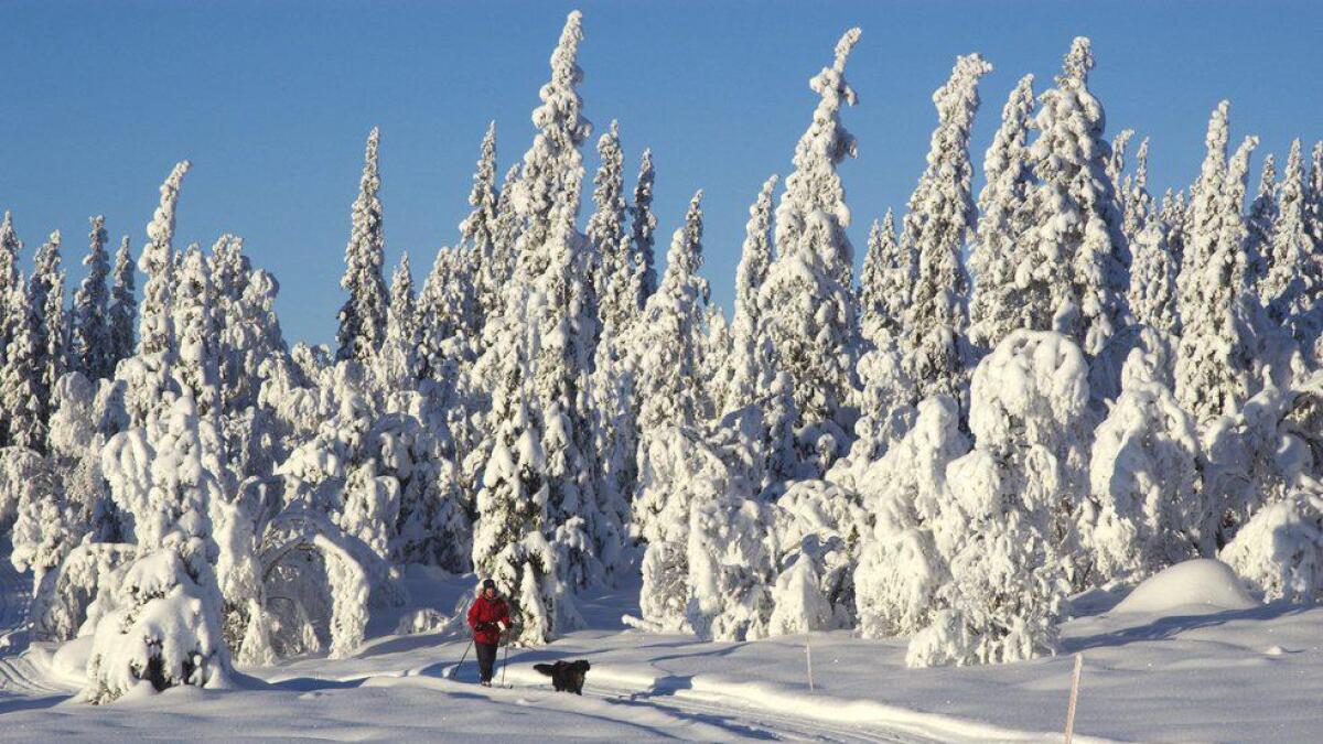 Kvit og kald vinter på Veståsen i Ål.