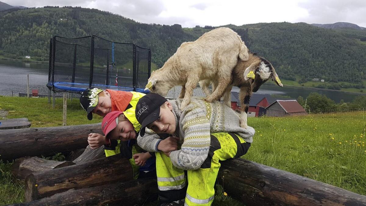 Desse gutane har fått nokre geiter på ryggen.