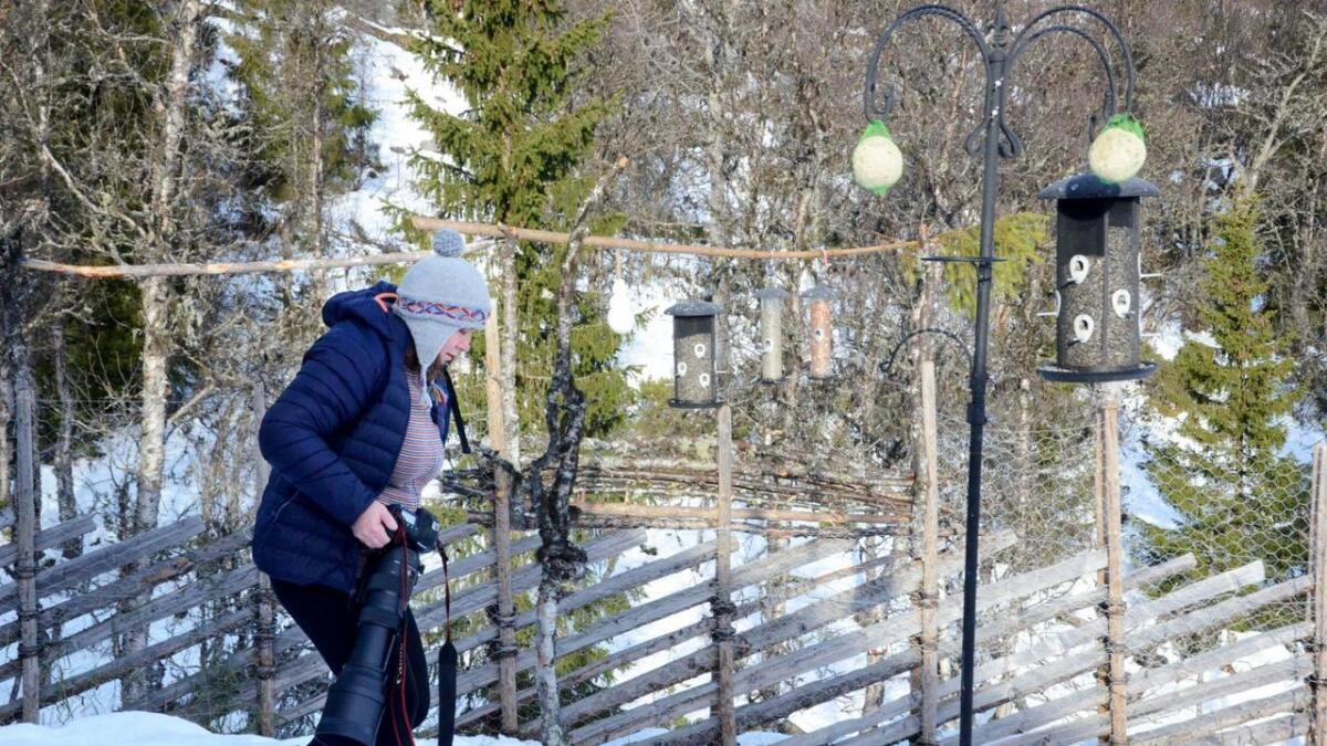 I Helsinglia florerer fuglelivet. Ikkje minst på grunn av matinga vinterstid. Det gir mange blinkskot for fotograf Kristin Devor.