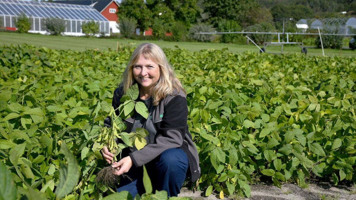 Ingunn Vågen forsker på grønnsakssoya ved Nibio i Landvik. Hun har forsket på ulike kålvekster, løk og belgvekster blant annet. Hun synes det er kjempespennende å se hvordan soyabønnene takler norsk klima.