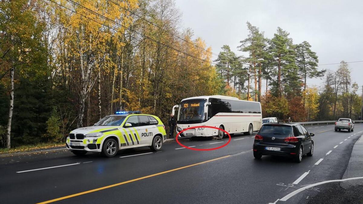 Her ligger elgen død under passasjerbussen etter påkjørselen i Arendal onsdag.