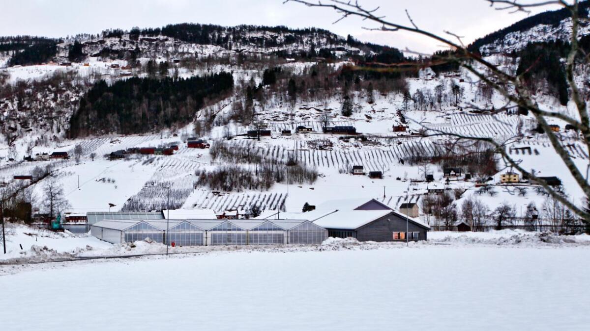Hordaland fylkesting har løyvd 20 mill kroner til å byta ut gartneria til Hjeltnes gartnarskule. No håpar Hordaland Venstre at dette blir fylgd opp med utvida aktivitet på skulen. ARKIV