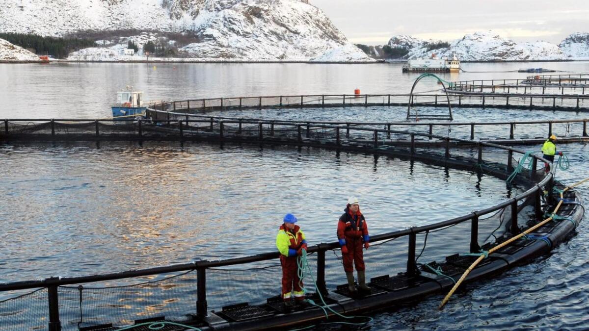 Nordlaks Oppdrett AS får en ny, grønn konsesjon i Troms.