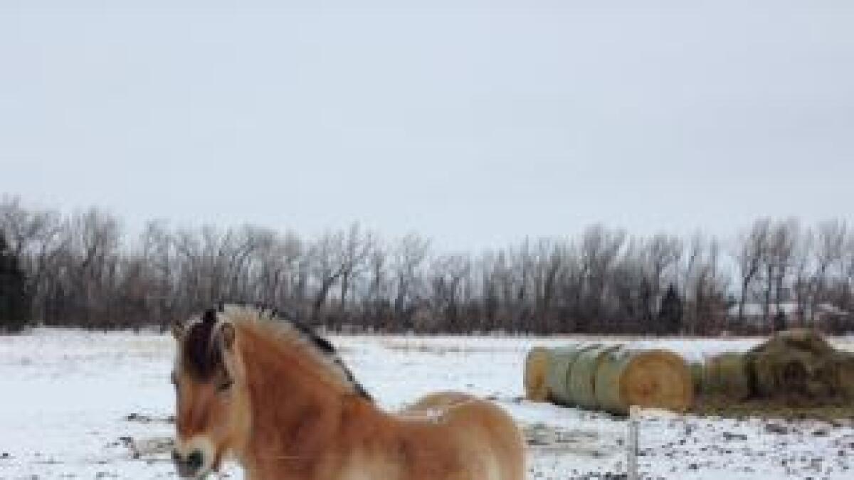 Hestene til Janne Myrdal går utendørs i kulda.