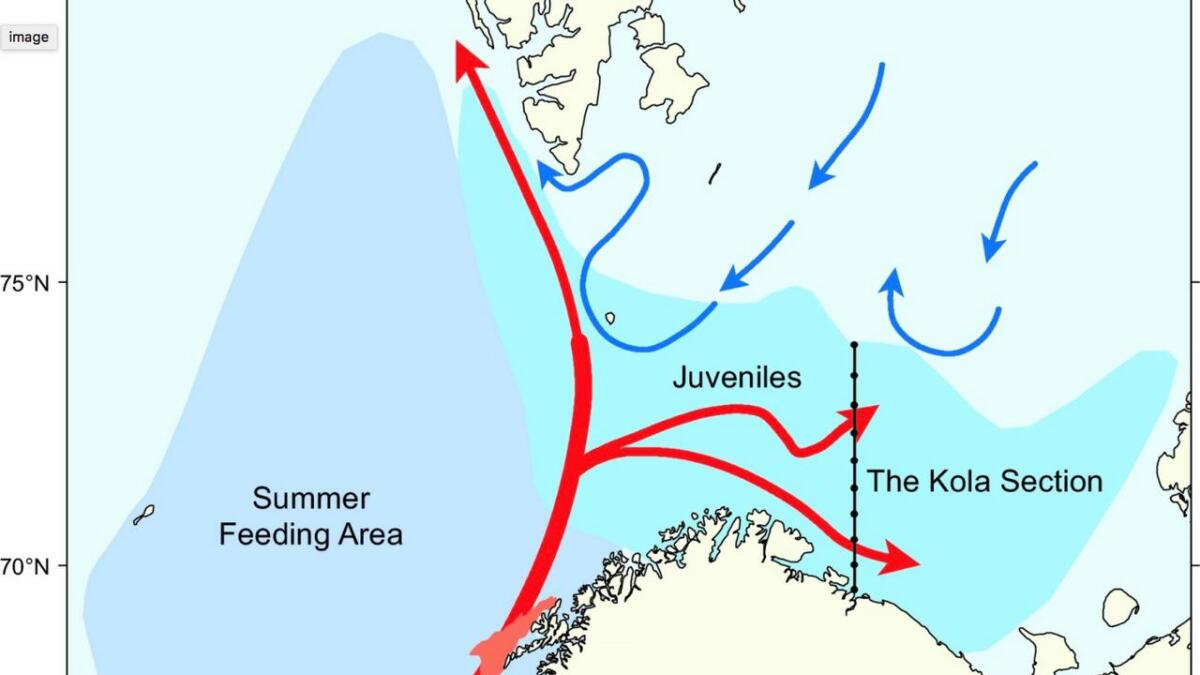 arktiske havstrømmer.  Kolasnittet strekker seg fra Kolafjorden og til 75 grader nord.