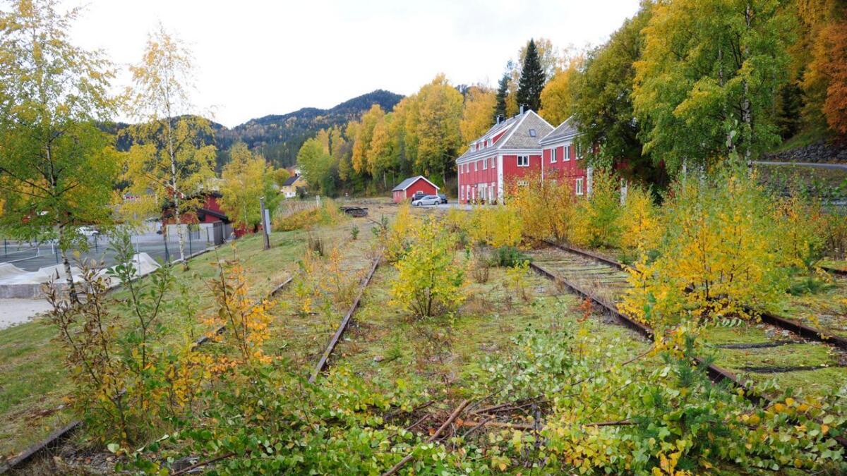 Området ved jernbanestasjonen på Rødberg er i ferd med å gro att. No vurderer Bane Nor å fjerne den freda delen av Numedalsbanen frå det nasjonale jernbanenettet. (Arkivfoto frå 2018)