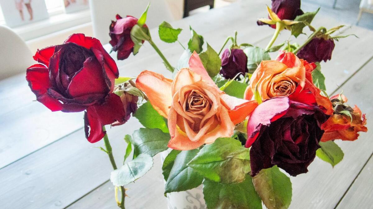 Blomsterkvisten i Tvedestrand er begjært konkurs. Dette er illustrasjons-blomster.