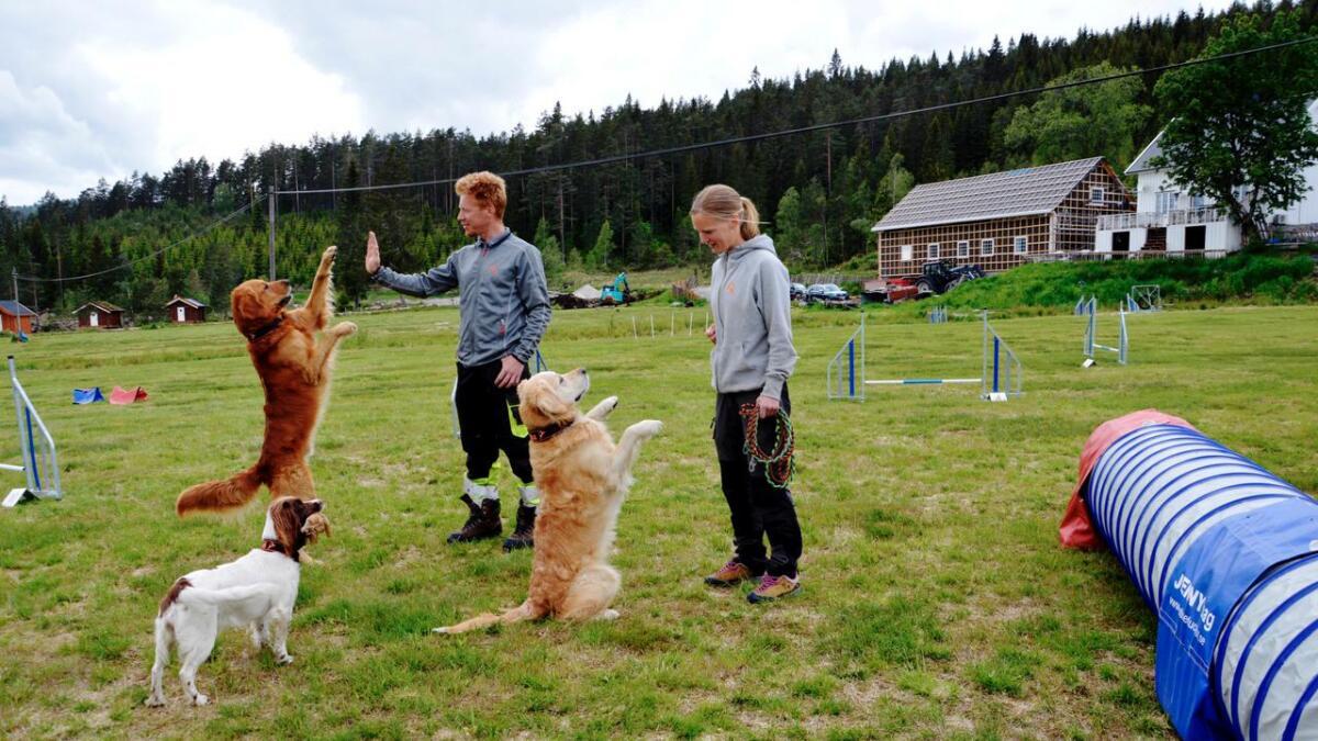 Bodil Fischer Breidablik (37) og John Skjørestad (39) driver Happy Hundesenter på Abusdal i Evje og Hornnes kommune der de bor med hundene Iii (foran), Ask (t.v.) og Felix.
