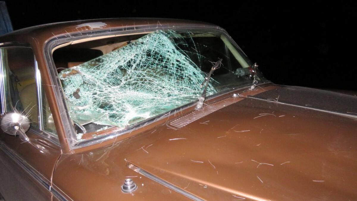 Bilen fikk store skader i sammenstøtet med elgen.