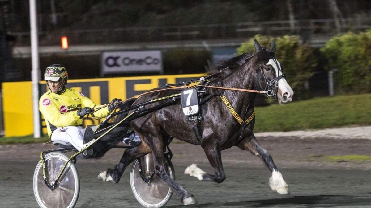 Vestpol Kongen, eigd av Rune Røyrås på Moisund, vann kvalifiseringsløpet til Norsk Travderby på Bjerke. Hesten gjekk heile 2600 m og vinnartida vart 1.25,8. Trenar og kusk er Øystein Tjomsland.
