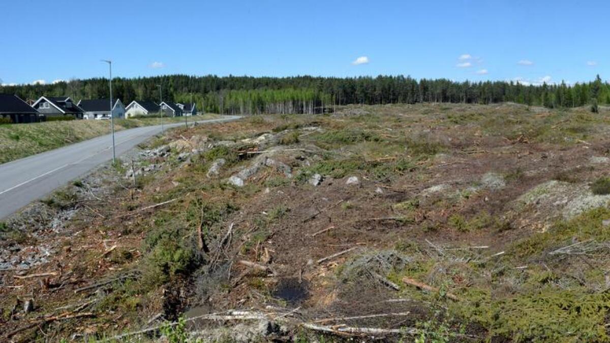 Store arealer med skog er ryddet for å gjøre plass til mer utbygging på Bjertnestunet. Øverst på det nyhogde feltet er det også planlagt    Montessori-barnehage og -skole.