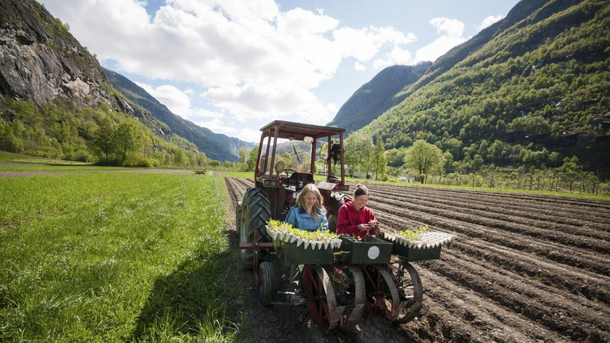 Nedbygginga av matjorda må stansa, skriv Voss Bygdekvinnelag. Her foto teke i samband med 100-årsjubileet til Sogn Jord- og Hagebruksskule i Aurland.