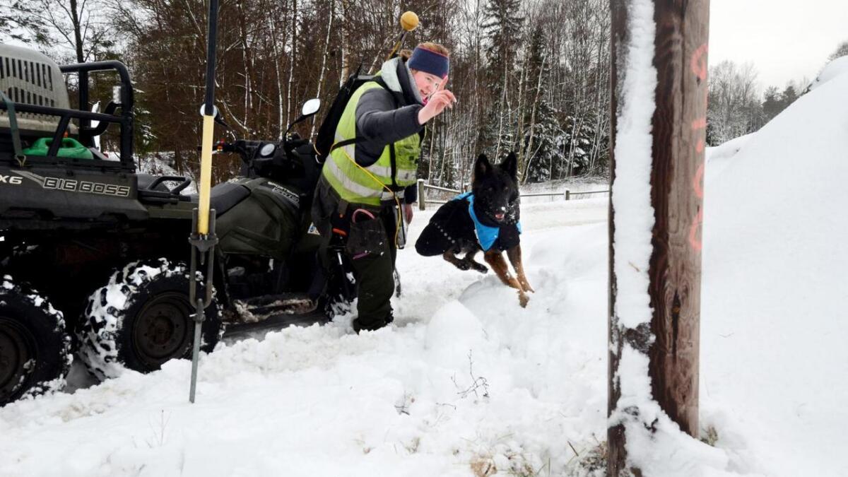 Ein levande hundenase kontrollerer opp til 100 stolpar for rote om dagen. Caysie er superklar når hundeførar Margit Kjernaas sender henne i søk.