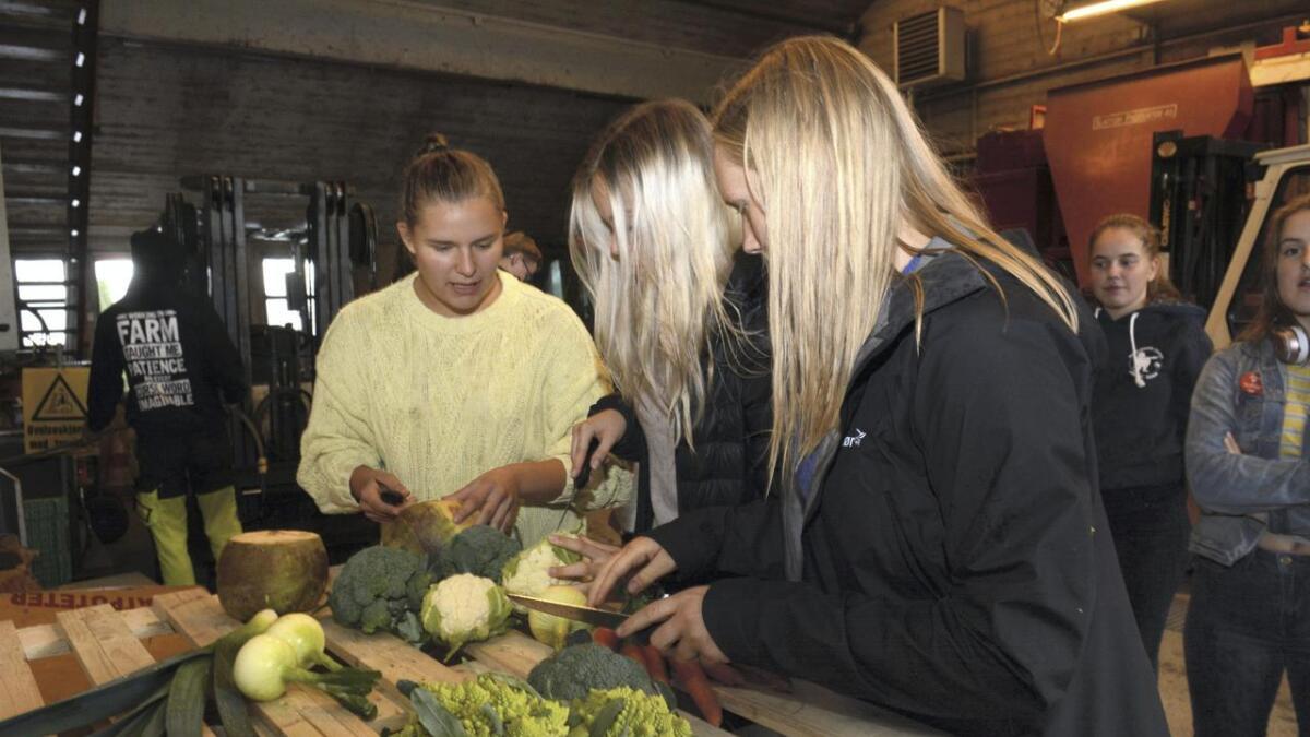 Disse tre Hvam-elevene skal presentere «jordens frukter» på stand på Årnes. (Fra venstre) Synne Louise Elverhøi, Maia Nabben Grønvoll og Solveig Ording Reierstad.