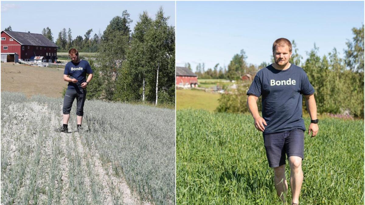 Bonden Lars Halvor Stokstad i Ullensaker i Akershus. I år er gressenga betydelig grønnere enn fjorårets kornåker, som ble hardt rammet av tørken i 2018. – Som bønder er vi avhengig av været, og det går opp og ned, men i fjor var det ekstremt. Vi hjelper hverandre, og i tillegg er det ordninger i form av at myndighetene stiller opp, sier Ullensakerbonden.