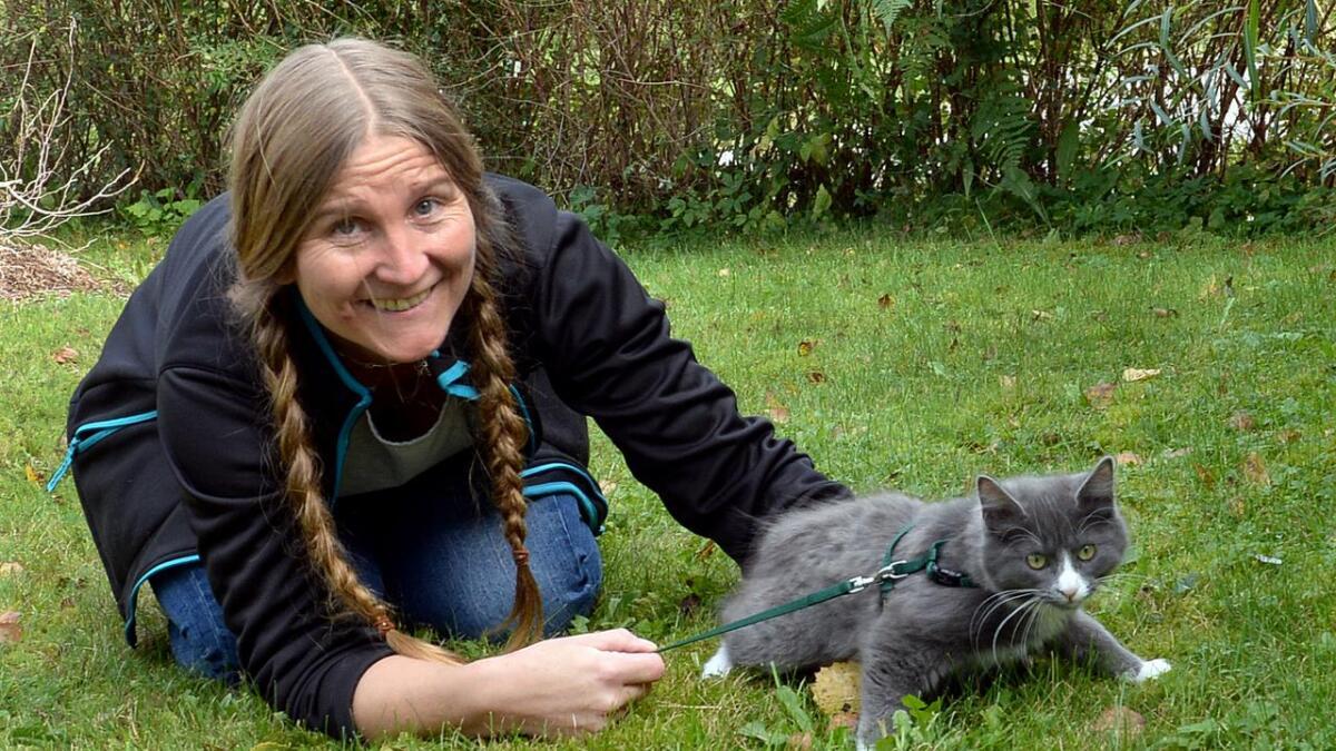 Maylinn Gabrielsen i Dyrenes hjelper sier hun får inn svært mange kattunger – ofte alene, noen ganger sammen med sin mor. Hun oppfordrer folk til å bruke bånd på katter til de får retningssans.