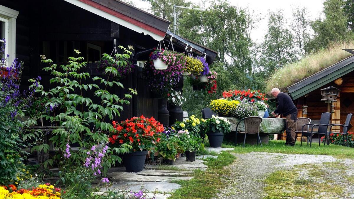 Vestlias hengande hage finn me på Dokklien i Vestlia i Ål, hjå bonde Geir Wengård.