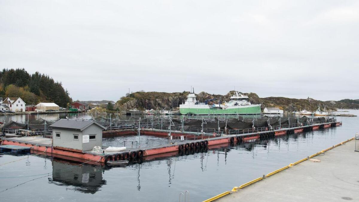 Kommunane i Sunnhordland kan venta seg store summar på konto i oktober. Her frå Bremnes Seashore AS i Øklandsvågen på Bømlo, der dei mellom anna produserer Salma-laks.