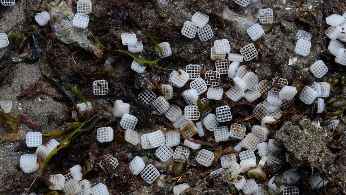 De små filtrene renser normalt kloakk for bakterier.