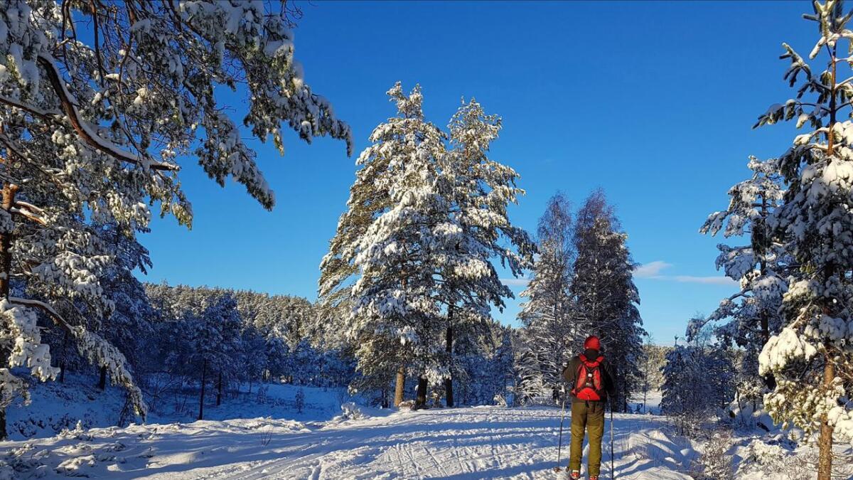 Slik ser det ut skiløypene ved Kleivvann i Gjerstad nå. Ole Jacob Bråten i fint driv innover skogen.