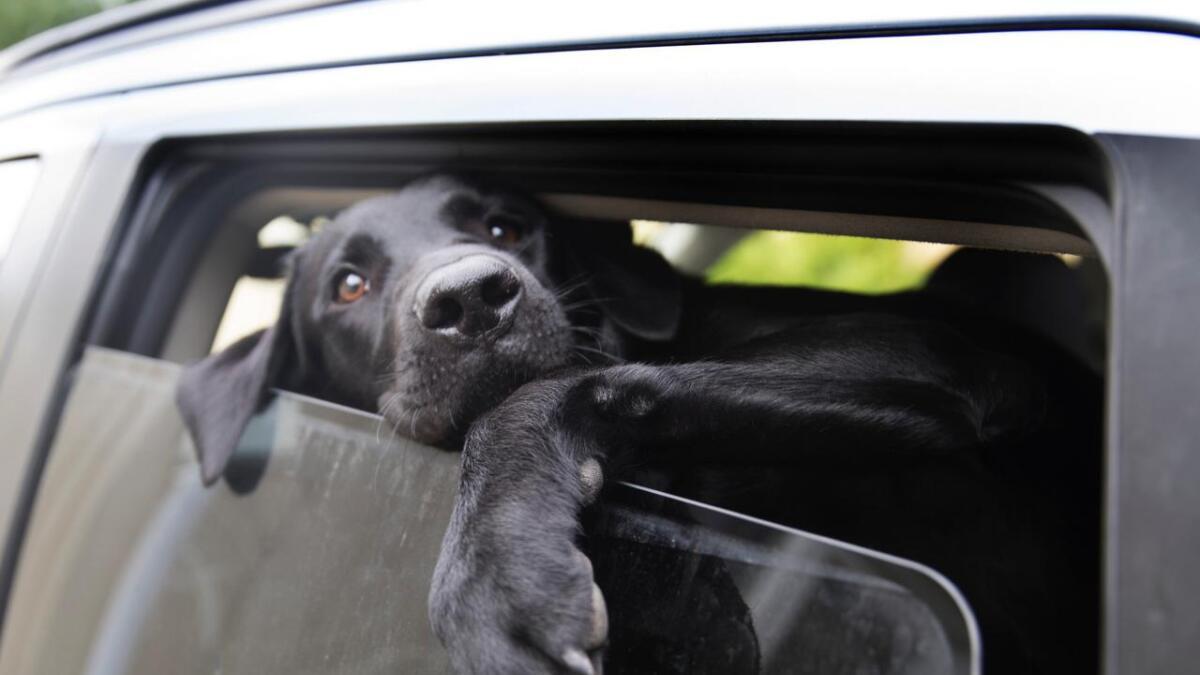 Åtte nye hunder er meldt syke siden fredag - en er fra Telemark