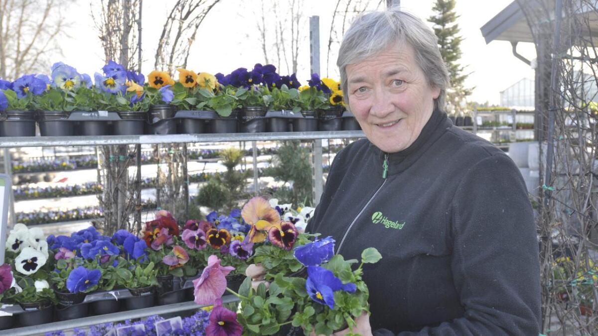 Stemorsblomster tåler kjølige vårnetter og er fine å starte vekstsesongen med, ifølge Kari Moss, daglig leder ved Hageland Skarnes. Alle