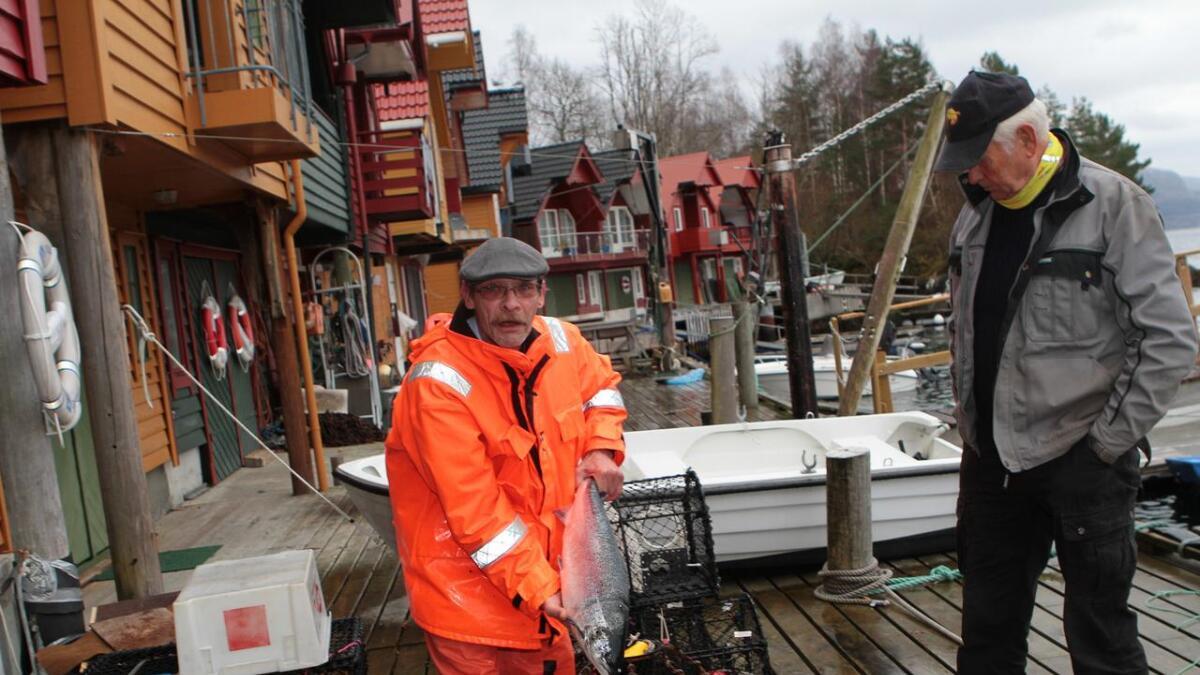 Jan Igland og Asbjørn Breivik driv med småfiske utanfor nausta sine i Hatvik. No er det mest oppdrettslaks å få.