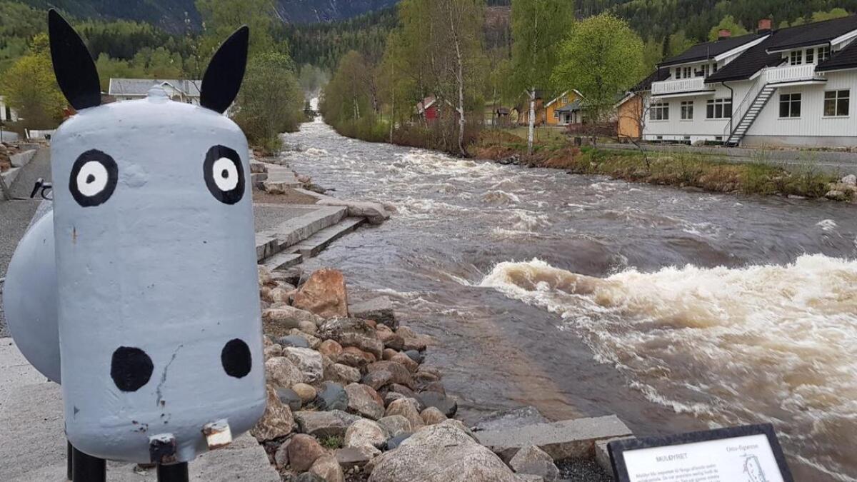 Elva Rukkedøla frå Hajembrua i Nesbyen fredag morgon klokka seks.