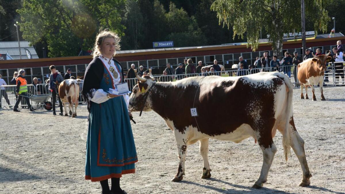 Fleire av dyra til Aslak Snarteland frå Fyresdal viste seg fram under mønstringa på Dyrsku'n. Her er mønstrar Anne Snarteland med kviga Gulldokke som fekk 1. premie.