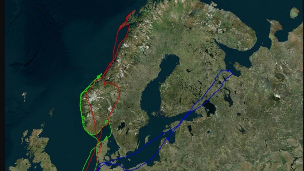 Den røde streken beskriver trekkruta til hann-tjelden (f.2016) fra Nederland til Vesterålen.