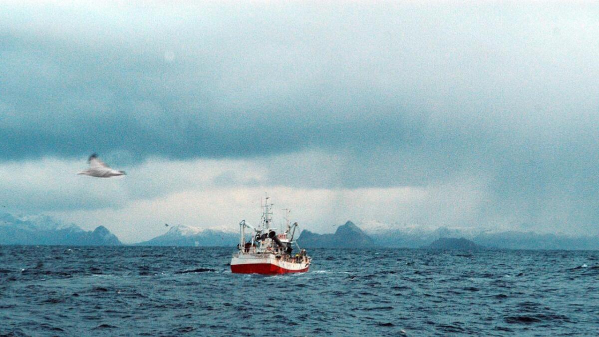 Bø-fiskere med kurs mot havn med last – vi ser Gaukværøy ved land i det fjerne. På motsatt side av Lofotodden – Røstbanken – gjør de klart for oljevirksomhet nå.