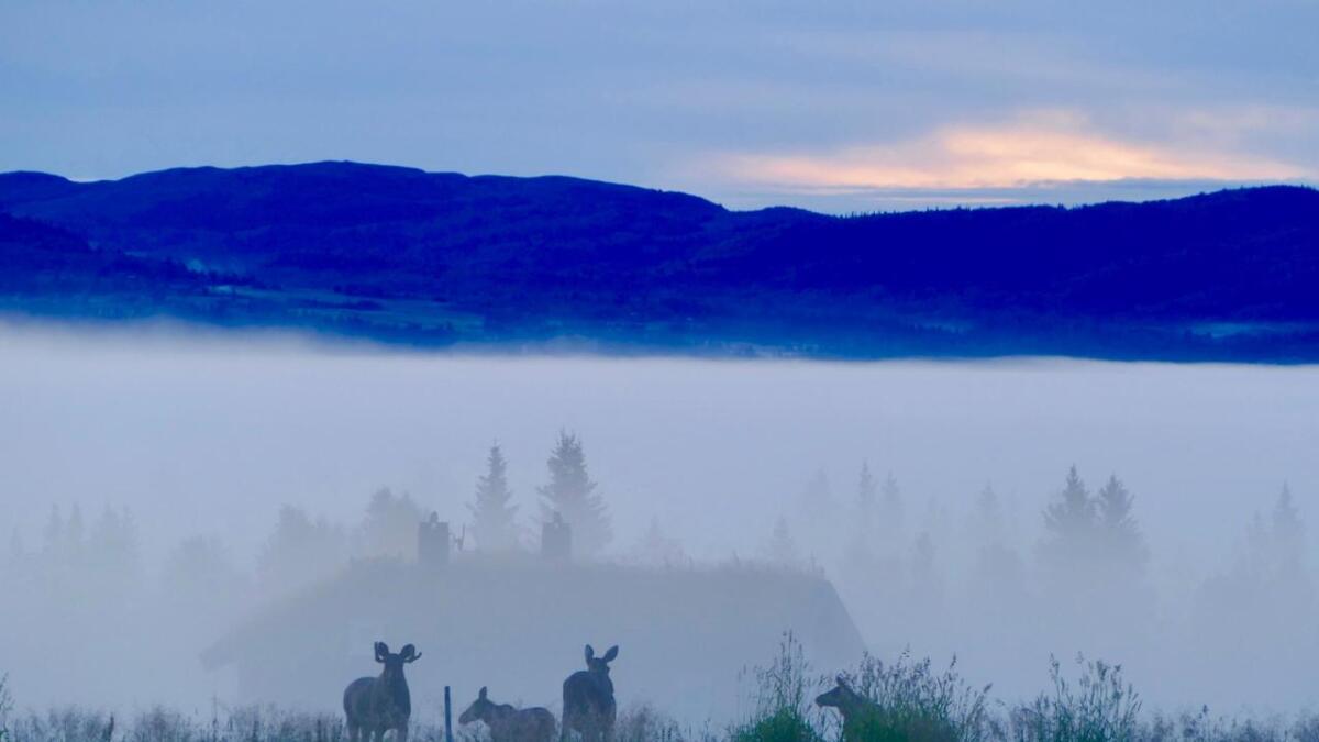 Dyra følgjer med. Om morgonen kan du møte elg i skodda.