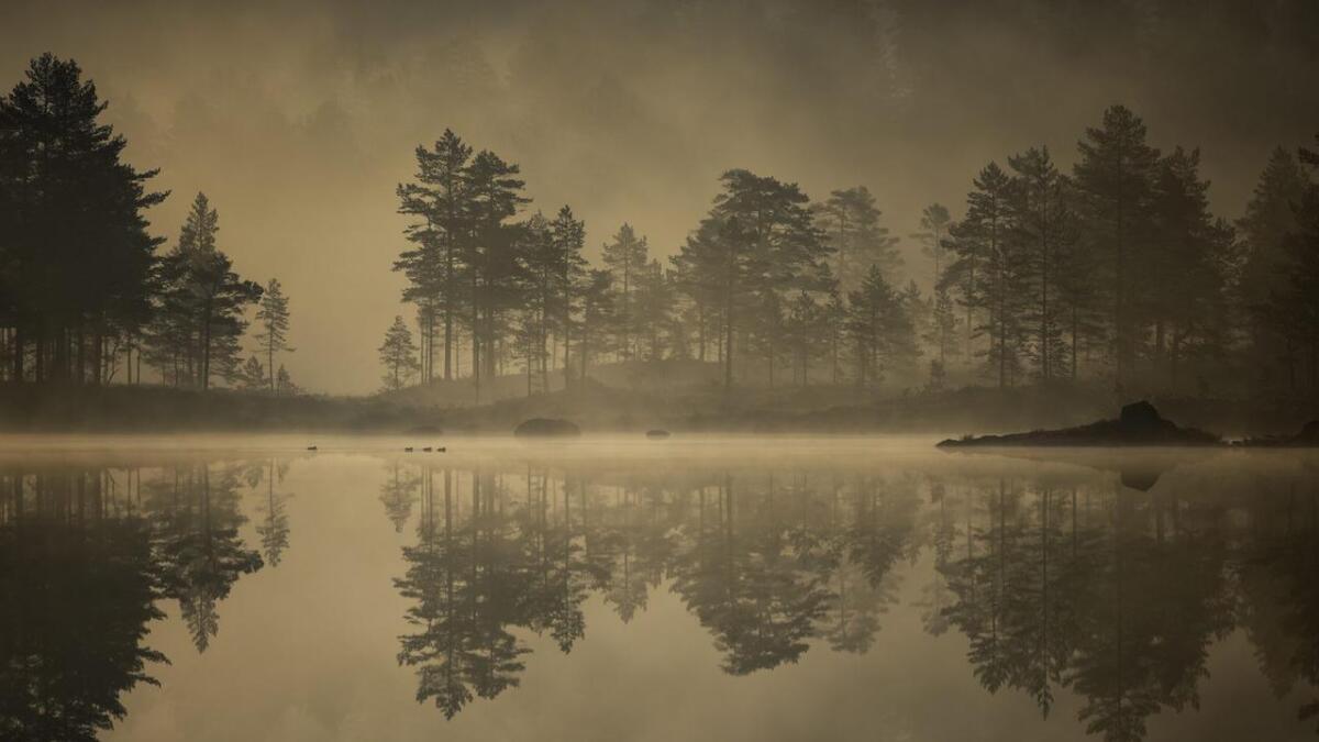Denne uka er det Helge W. Nygårds bilde Vennesla film- og naturfotoklbb har valgt å presentere.